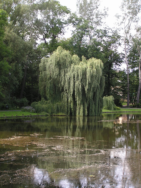 Lake in a park