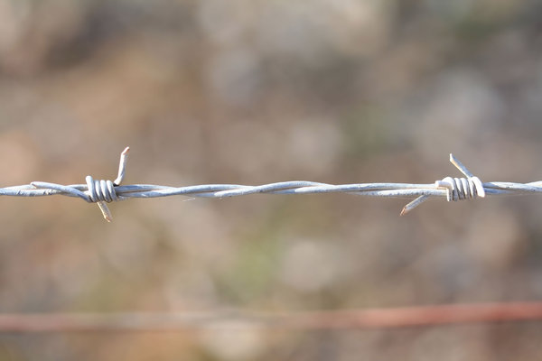 barbed wire: barbed wire