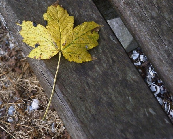 Leaf on bench