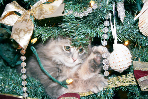 FUZZY IN THE TREE 1