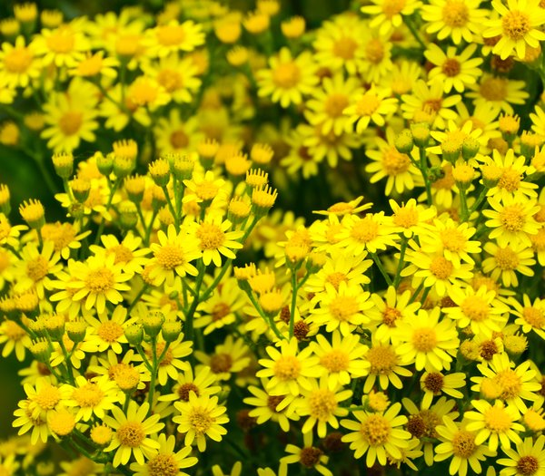 Yellow: some yellow weeds