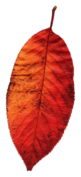 Leaf 6: A series of isolated leaves.