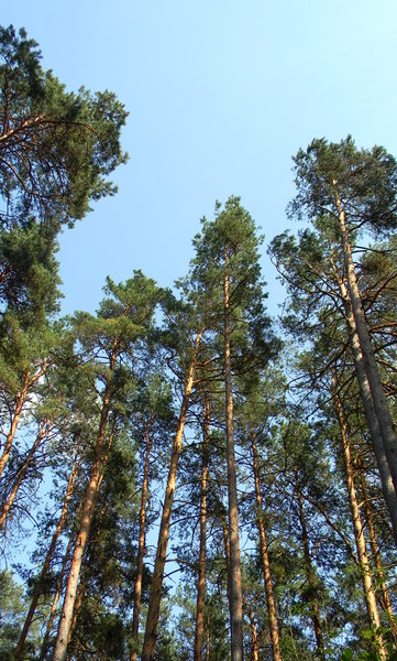 Belarusian Forest: Some shots of the Belarusian Forest in July, 2010.