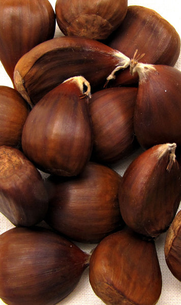 chestnuts: scoopfull of chestnuts