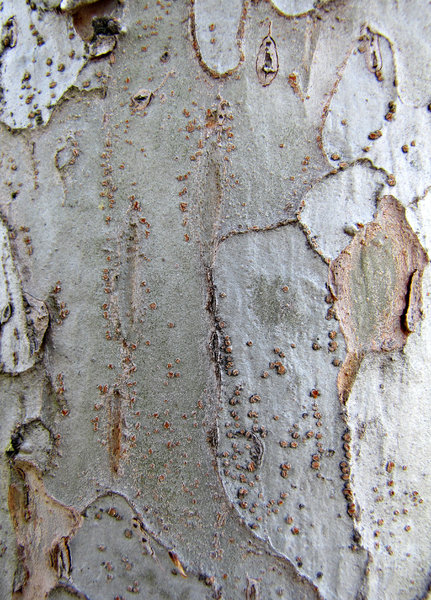 tree trunk textures: varieties of tree trunk bark textures close-up