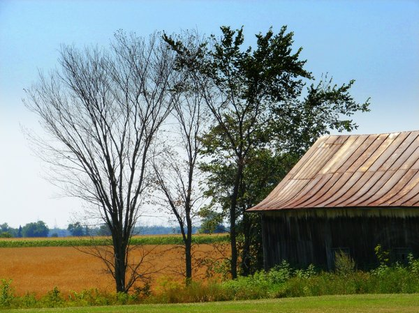 Old tin roof barn