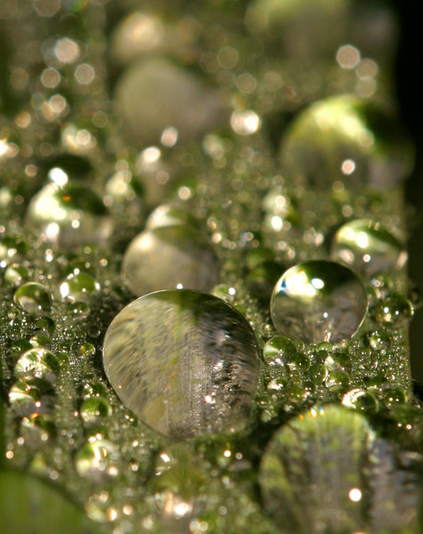 dew drops: All of my non human subject photos are unrestricted so you do not need to contact me for permission. If you are planning on using a photo with people, please contact me in advance. Please mind that I will not allow them to be used for any religious purpos