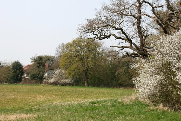 Field hedge in spring: A field hedge in West Sussex, England, in early spring.