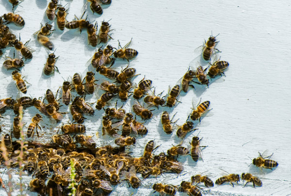 Bee hive: entrance of a bee hive