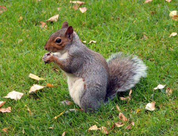 Squirrel: Squirrel