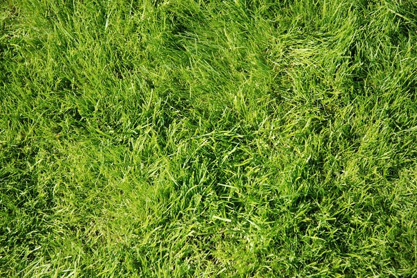 grass: how to grow it...