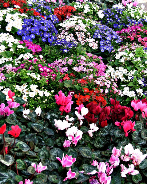 city flowers display