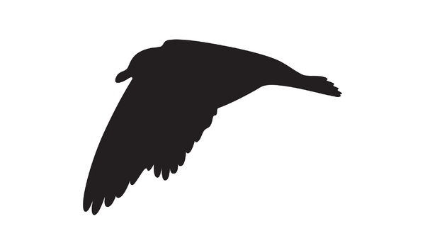 silhouette flying seagull: Adobe Illustrator CS5