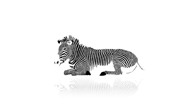 Wallpaper Zebra: yes I've used a stockphoto, 