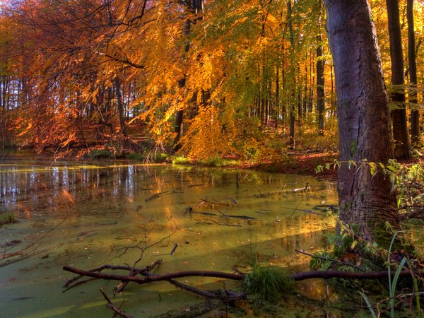 Forest lake - HDR: