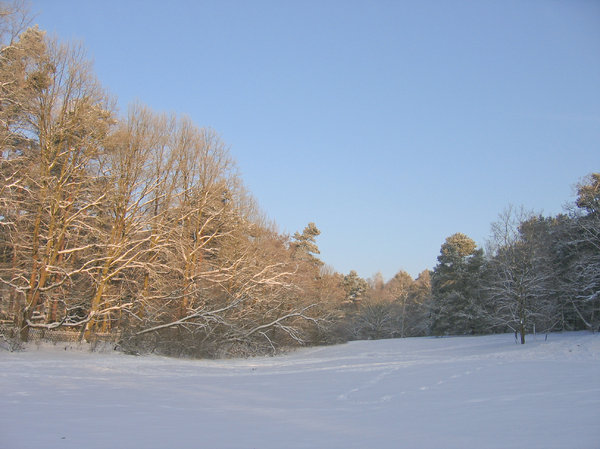 peaceful winter park scenery