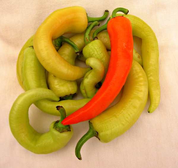 sweet peppers: colourful sweet peppers