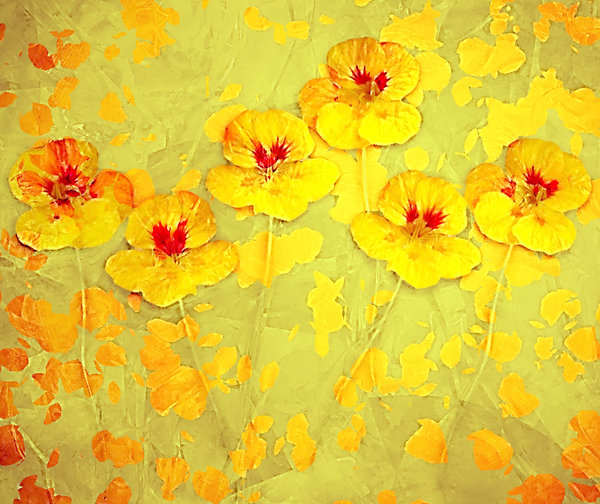 Nasturtium Abstract 6
