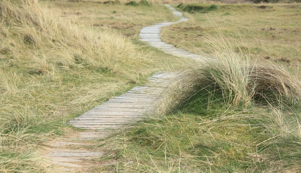 Path through the dunes
