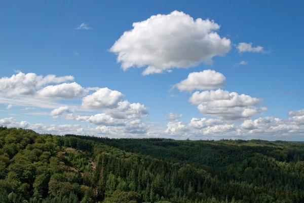 Forest and cloud: Clouds over a forest in Denmark.