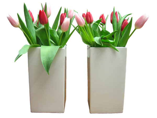 Tulips (Dutch Flowers)