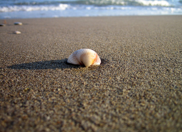 Little Shell on the Beach