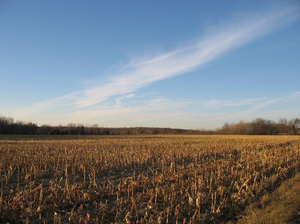 harvested field: a harvested field of corn at sunset