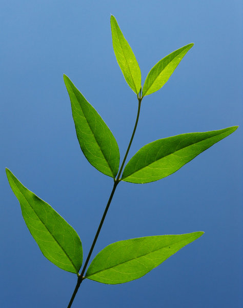 new leaves