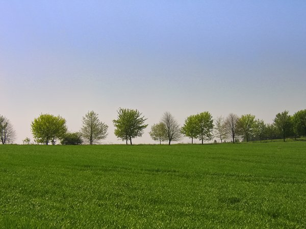 tree row on a spring meadow 2: tree row on a spring meadow 2
