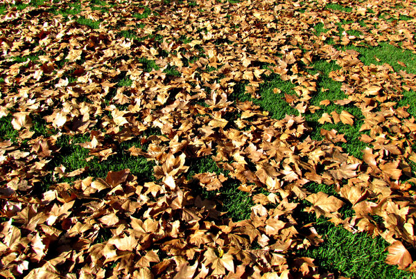 autumn carpet1