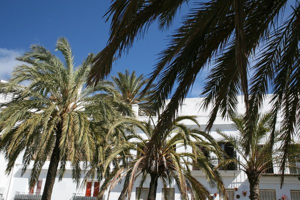 Town Palms: Palm trees in the main square of a small town in Spain.