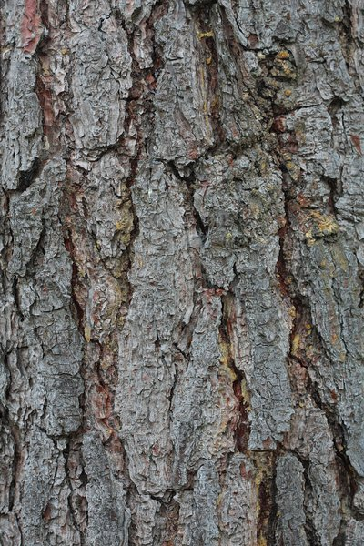 Tree outer bark