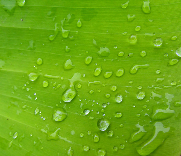 greenleaf raindrops