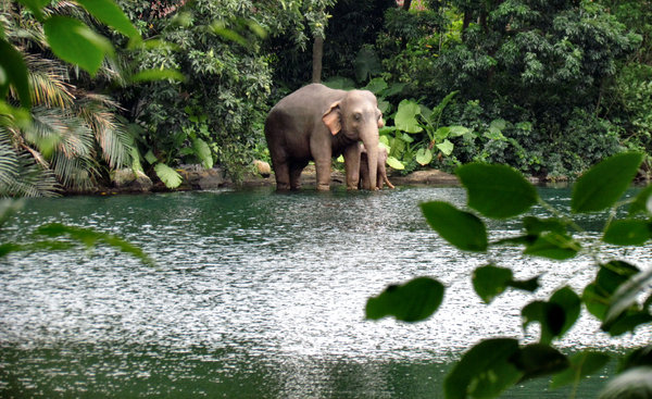realistic display: realistic elephant display in jungle setting