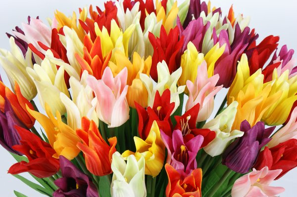 tulips: colourfull artificial tulips