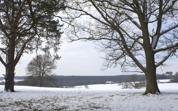 Winter landscape: Fields and woodland in West Sussex, England, in winter.