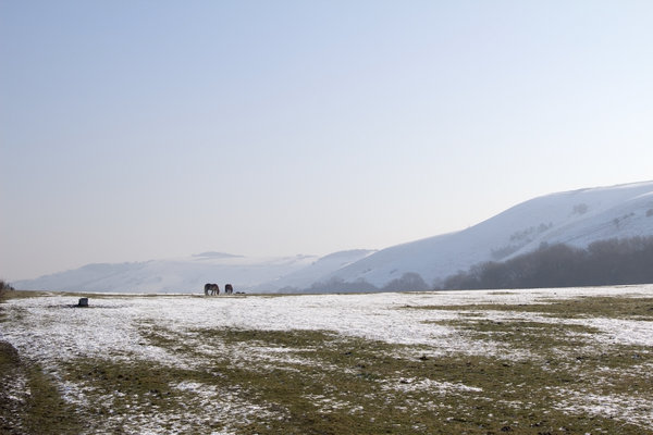 South Downs fields in winter
