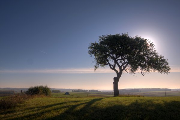 Soft tree - HDR:
