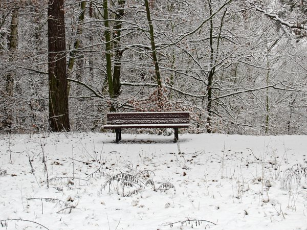 lonely winter bench