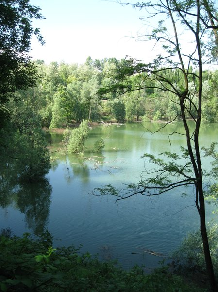 lake and trees: view of a little lake in a forest, Lombardy, Northern Italy