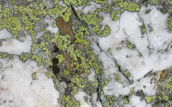 Lichen on Rock: Lichen on rock, thin