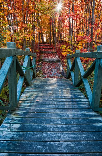 Bridge to Fall: Bridge leading to fall foliage in Mont Orford National Park, Quebec (Canada).
