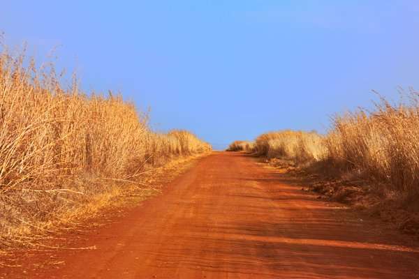 Safari Trail: Wide-angle photo of a dirt trail in Kruger National Park, South Africa.