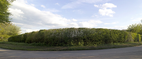 Long curved hedge