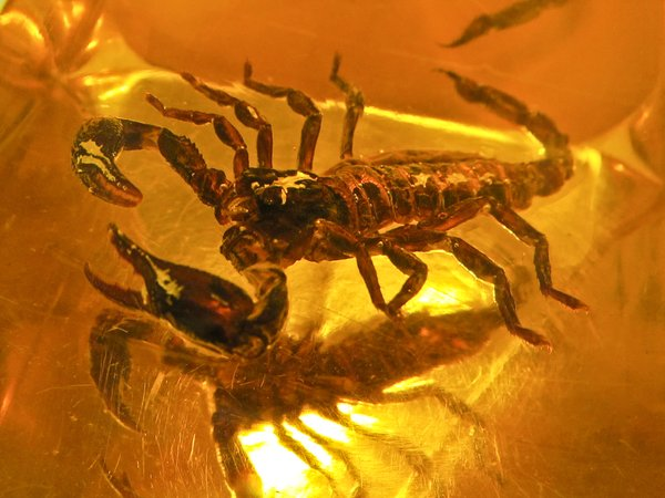 scorpion in bastard amber 3: scorpion in bastard amber 3
