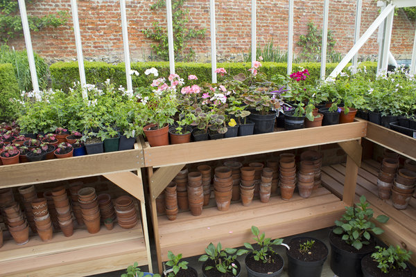 Greenhouse plant pots: Plants and pots in a greenhouse in England.