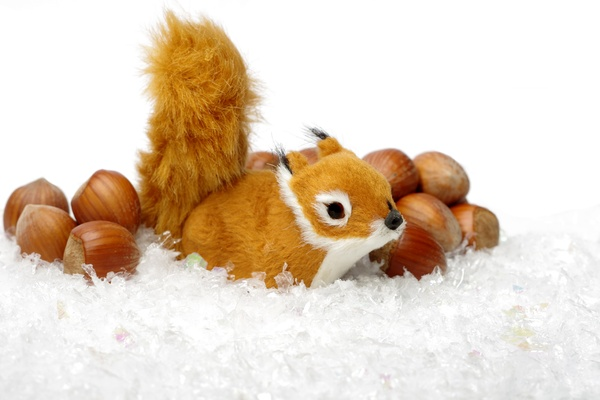 Squirrel, hazelnuts and snow