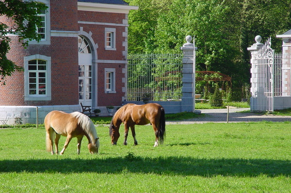 Horses in the meadow: Horses around our house