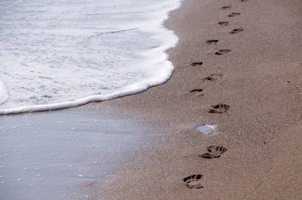 Follow my steps 2: Footsteps on the beach