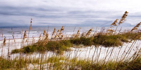 Sea Oats: Tybee Island on a cold November Morning